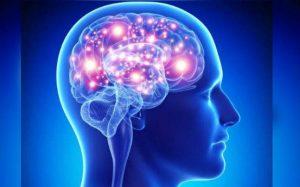 brain-300x187